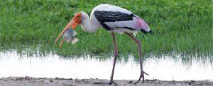 vuko-laban-birds-of-all-colours