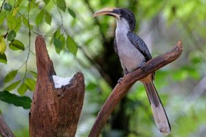 birds-of-sri-lanka-vuko-laban