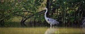 vuko-laban-bird-photographer