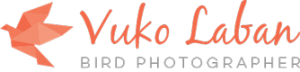 vuko-laban-bird-photographer
