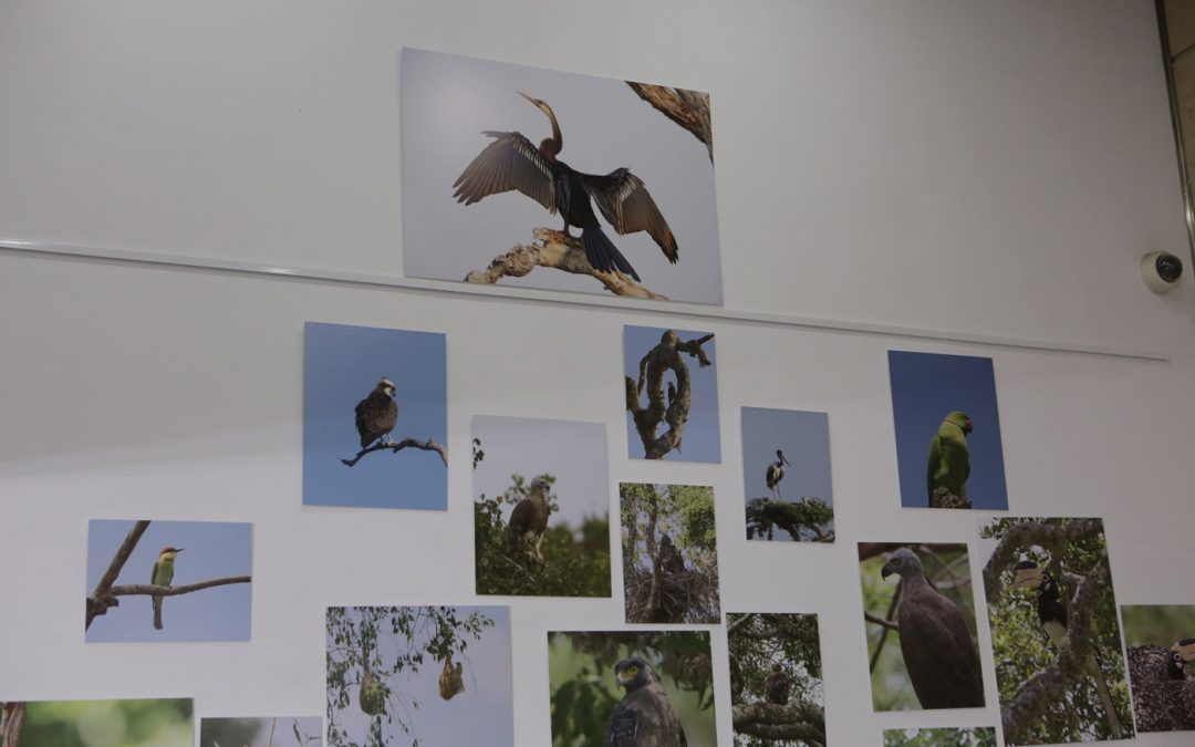 "Exhibition ""Birds of all Colours"""