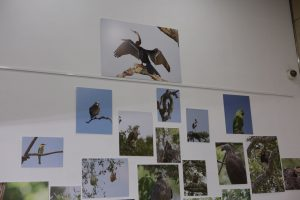 Exhibition Birds of all Colours