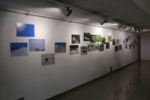 """Exhibition """"Birds of all Colours"""""""